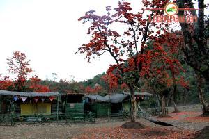 Ajodhya Pahar Camp